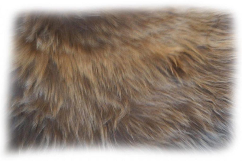 Islandschaffell Detail