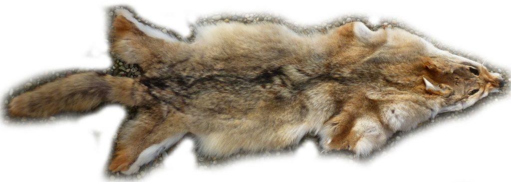 Kojotenfell