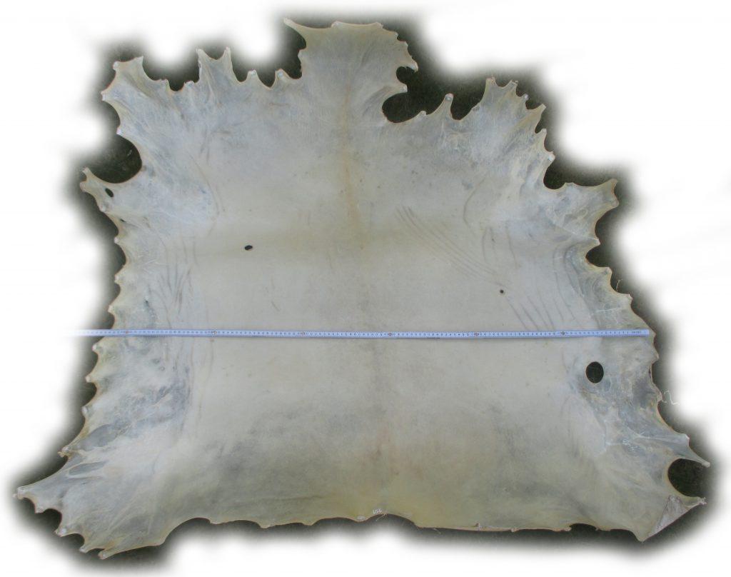156 Hirschrohhaut Breite