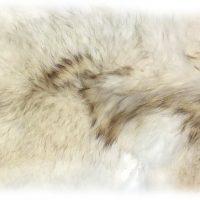 Kojotenfell weiß und weich Rückendetail
