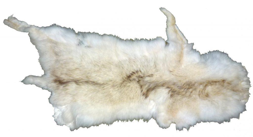 Kojotenfell weiß und weich Fellseite