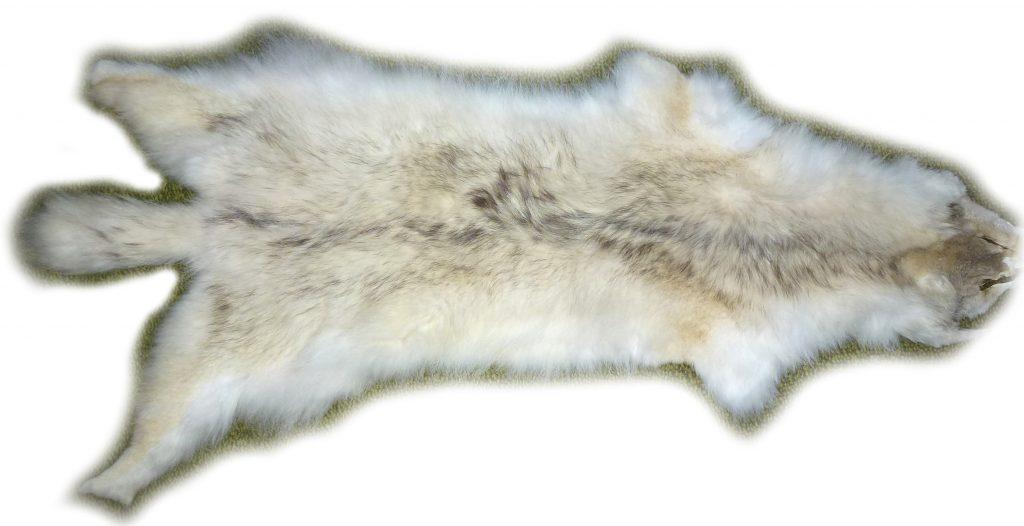 Steppenwolf Gesamtansicht