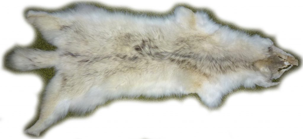 Kojotenfell Gesamtansicht