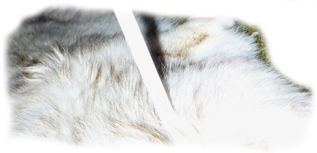 Kojotenfell Haardetail