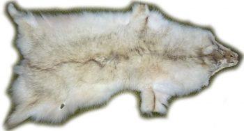 Steppenwolf weiß Gesamtansicht