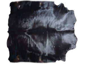 Auerochse schwarzes Fell
