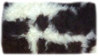 Schaf braun weiß gescheckt