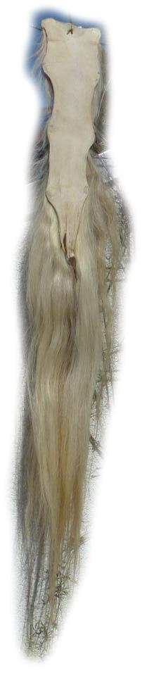 Pferdeschwanz blond 135 cm Lederseite