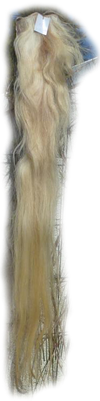 Pferdeschwanz  blond 150 cm Gesamtansicht