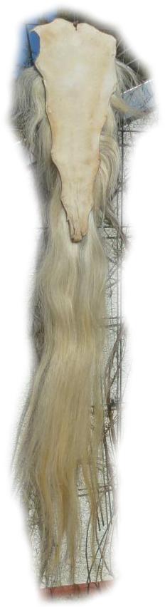 Pferdeschwanz blond 150 cm Lederseite