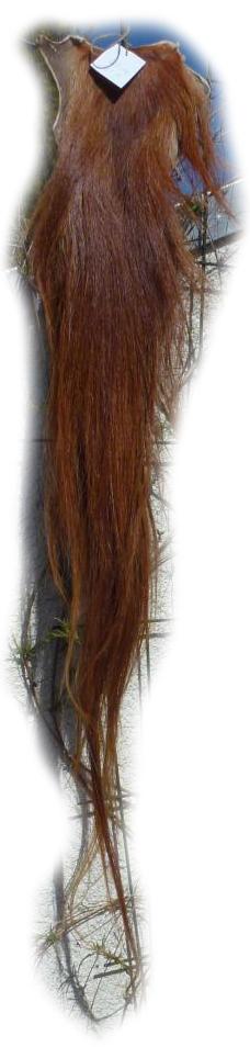 Pferdeschwanz rot 120 cm Gesamtansicht