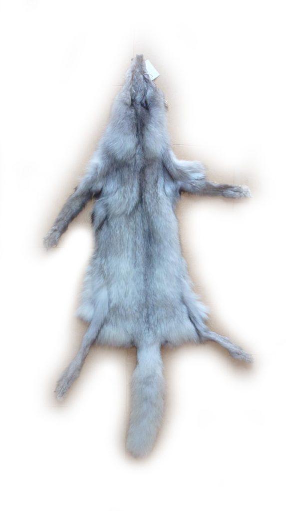Blaufuchsfell Gesamtansicht