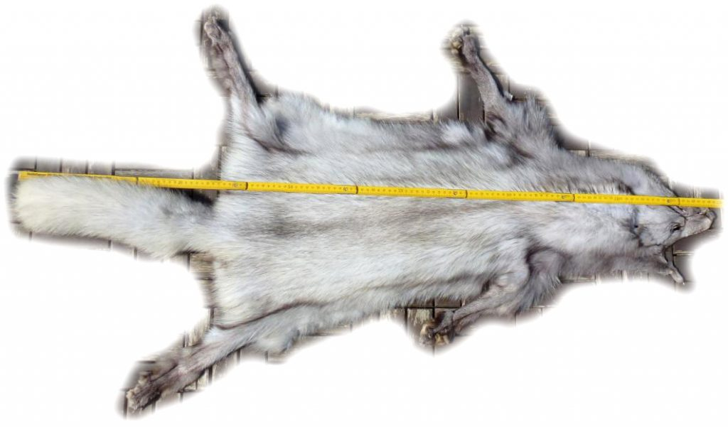 Blaufuchsfell Maße