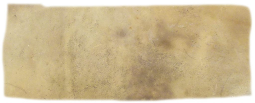 Hirschrohhaut Detail