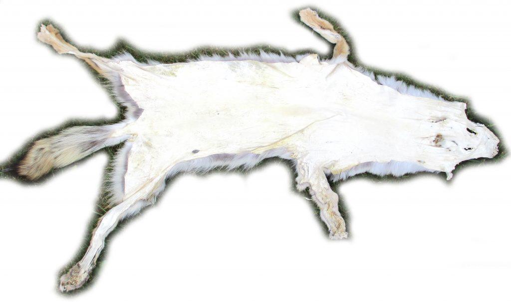 Kojotenfell Lederseite