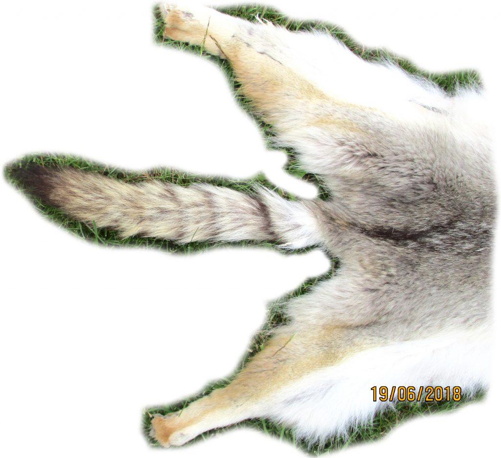 Kojotenfall Schwanzdetail