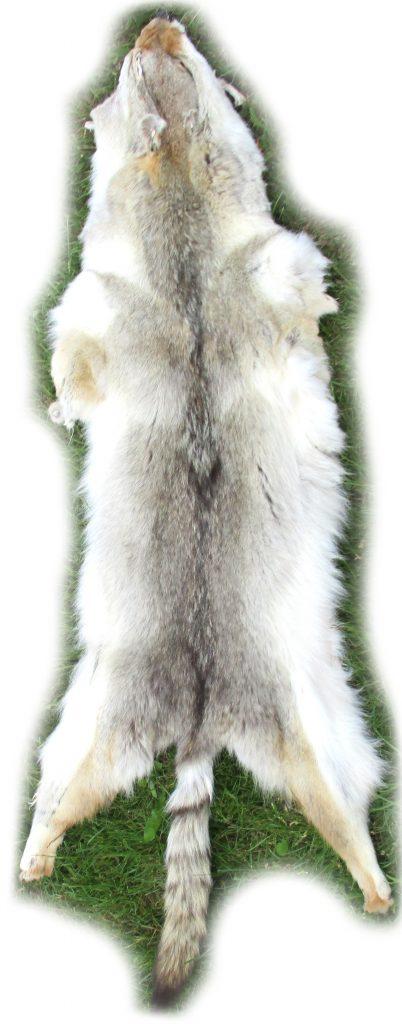 Kojotenfell-Gesamtansicht
