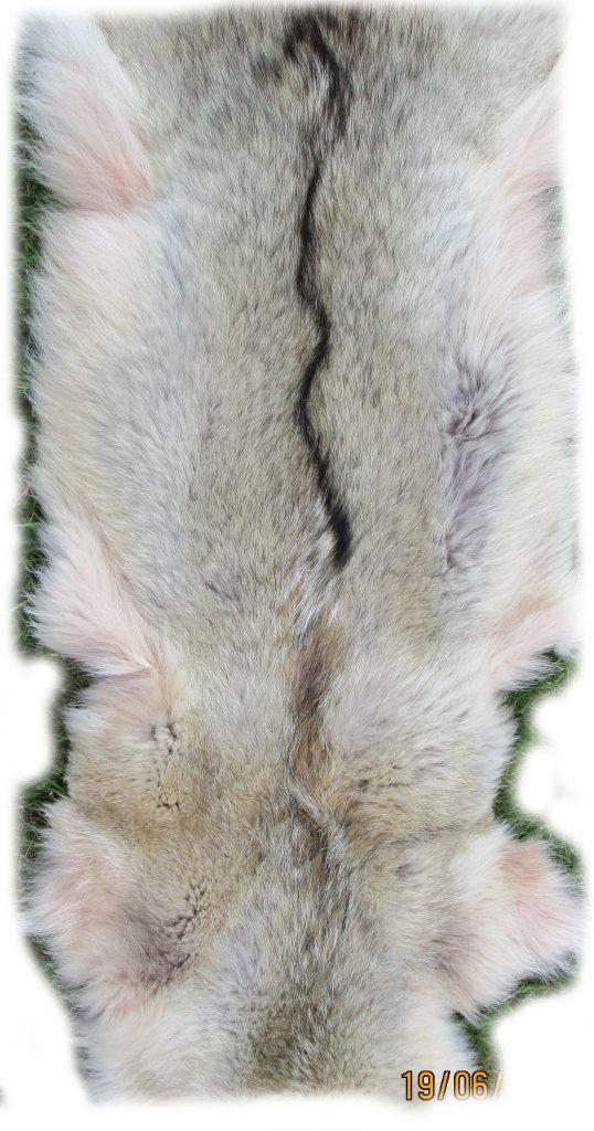 Kojotenfell Rückendetail
