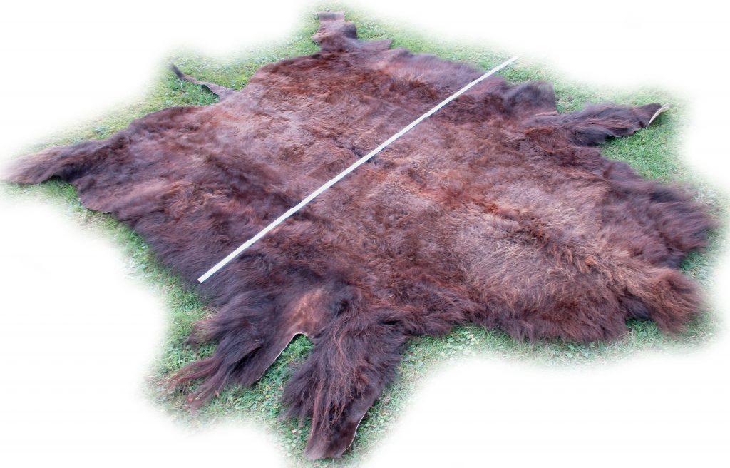 Gesamtbreite des Bisonfelles