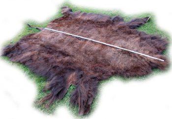 Gesamtlänge des Bisonfelles