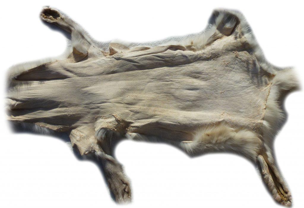 Blaufuchs Lederseite