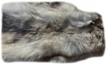 Blaufuchs Nackendetail