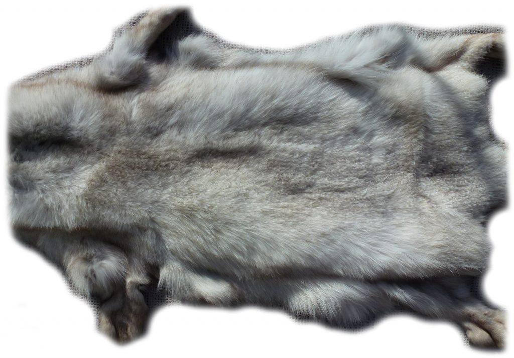 Blaufuchs Rückendetail