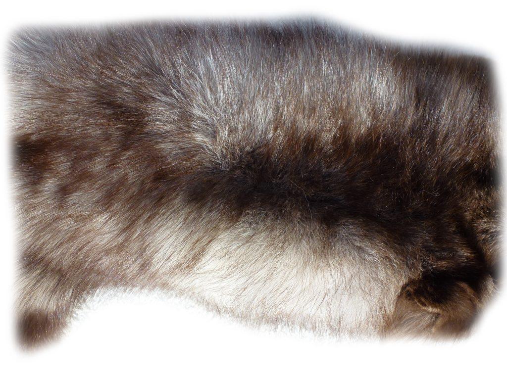 Blaufuchs Nackenhaardetail