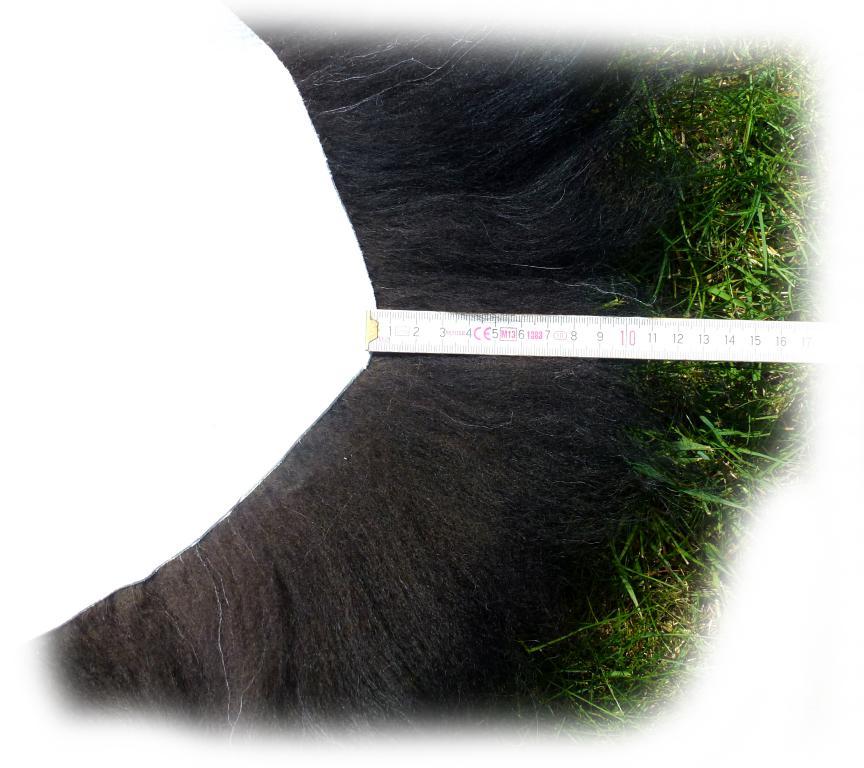 Islandschaffell Weiß mit schwarzen Partien