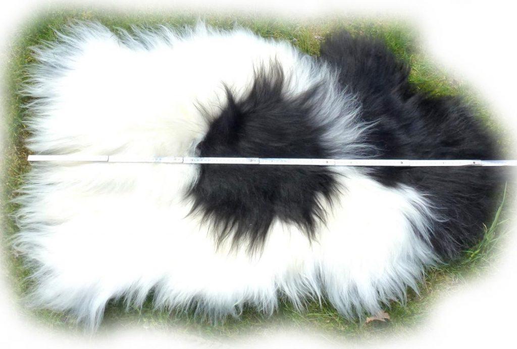 Islandschaffell Weiß mit schwarzen Partien Optische Gesamtlänge