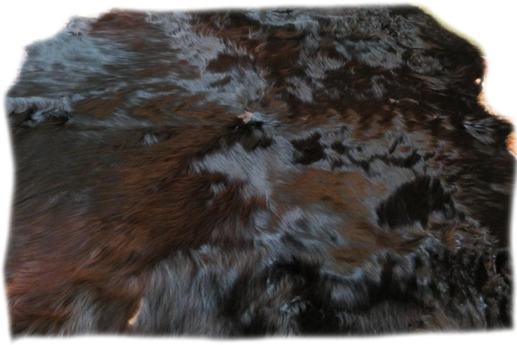 Schottisches Hochlandrind schwarz Fell