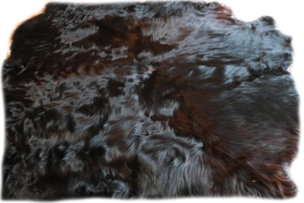 Schottisches Hochlandrind schwarz Felltdetail