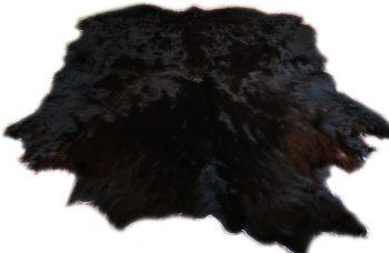 Schottisches Hochlandrind schwarz Gesamtansicht