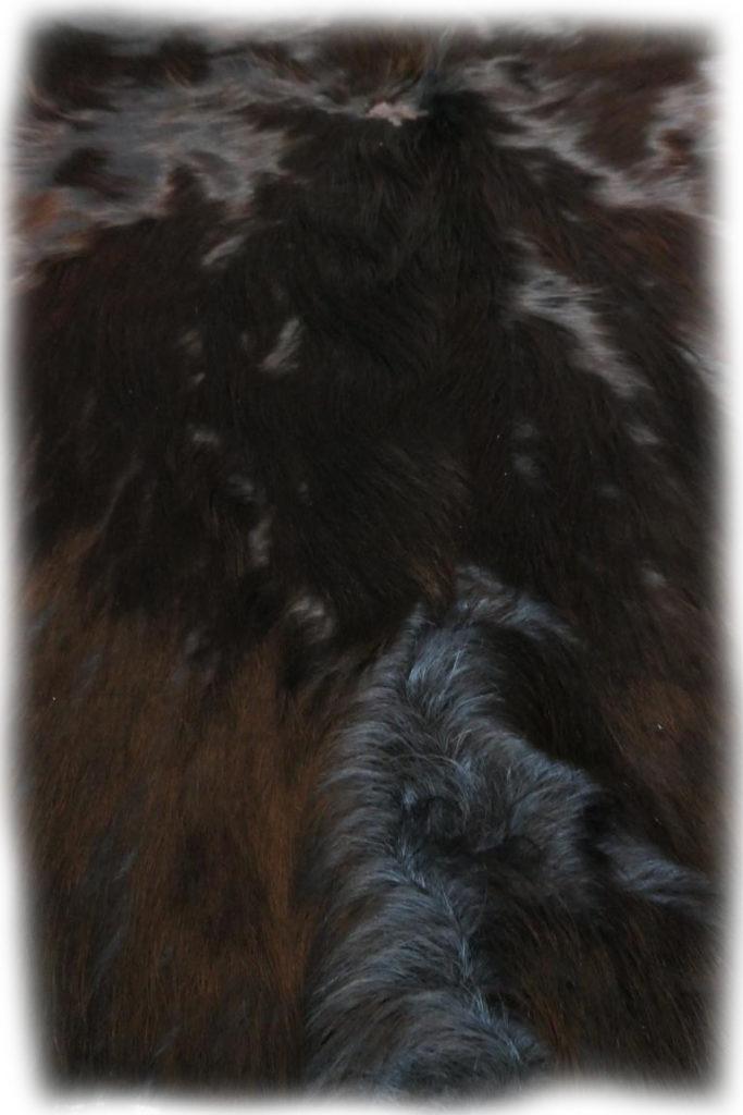 Schottisches Hochlandrind schwarz Nackenhaardetail