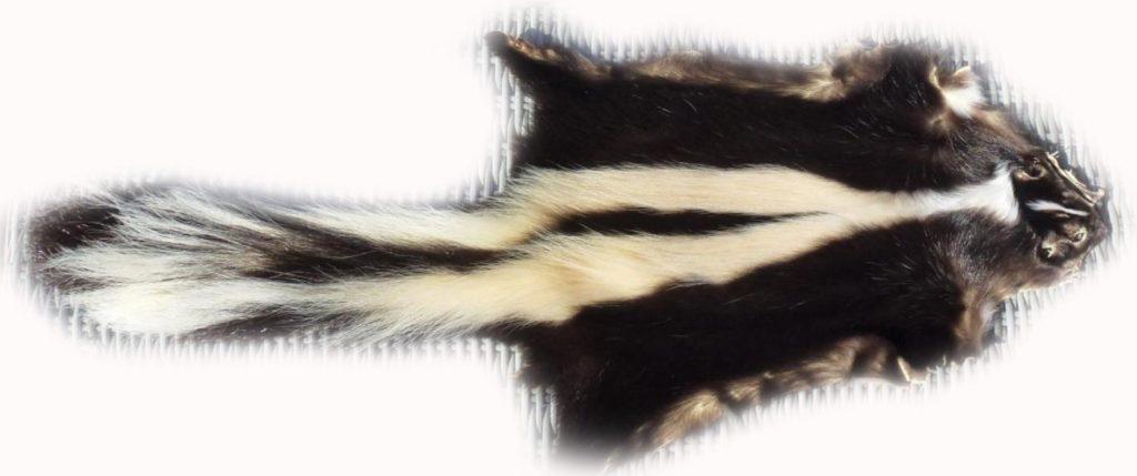 200901 Skunk 87 cm Gesamtansicht