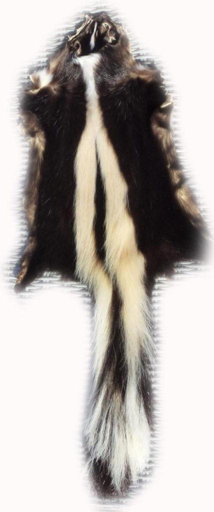 200901 Skunk 87 cm Gesamtansicht h