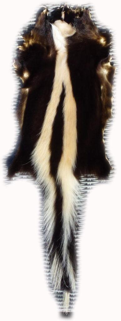 200902 Skunk Gesamtansicht