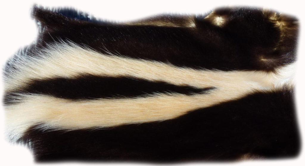 200902 Skunk Rückenzeichnung