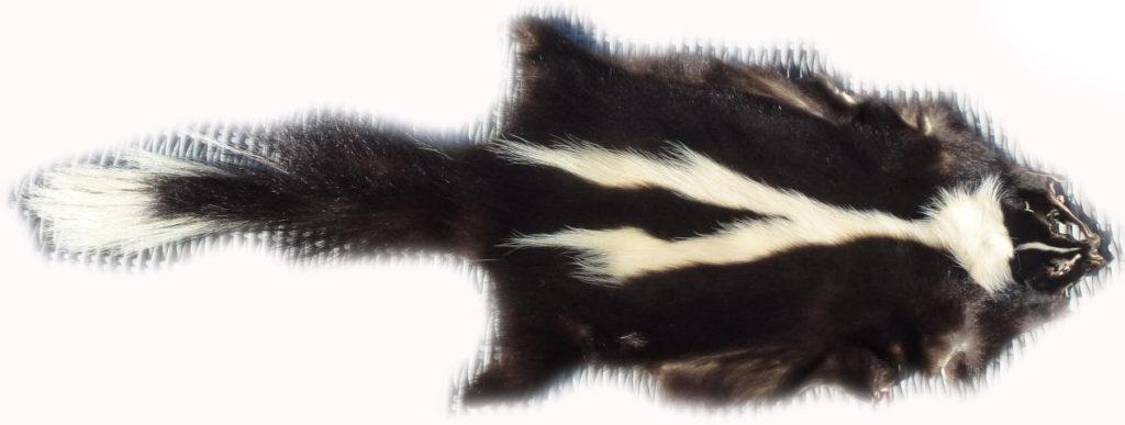 200903 Skunk Gesamtansicht