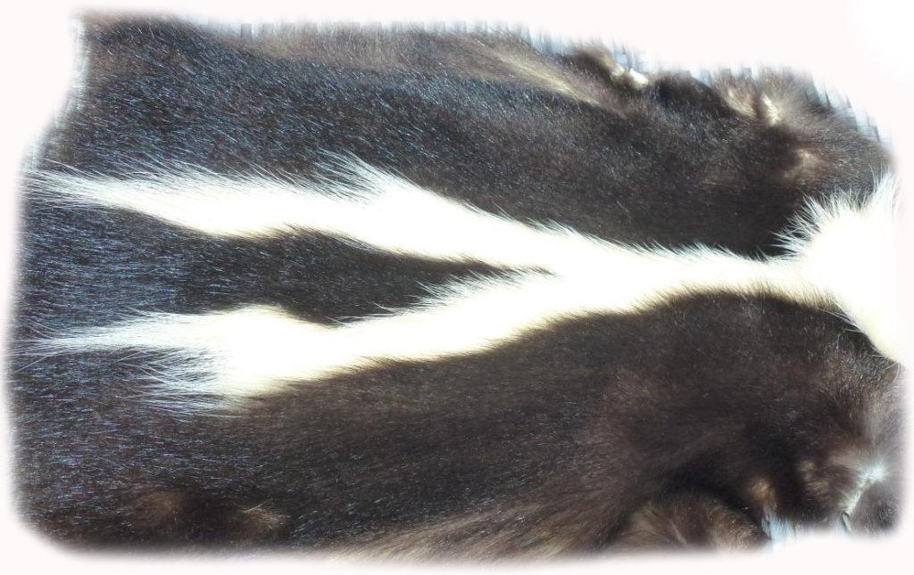 200903 Skunk Rückenzeichnung