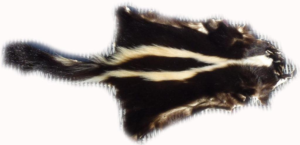 200904 Skunk Gesamtansicht