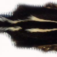 200905 Skunk Gesamtansicht