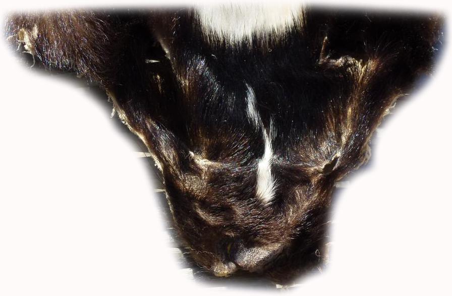 200905 Skunk Gesichtchen