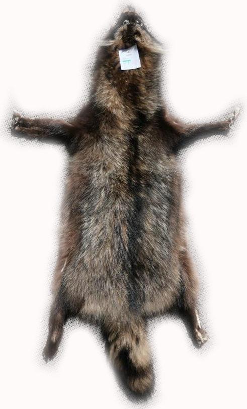 200906 Marderhund 105 cm Gesamtansicht