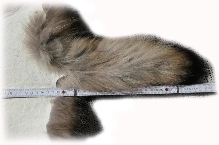 200906 Marderhund 105 cm Länge