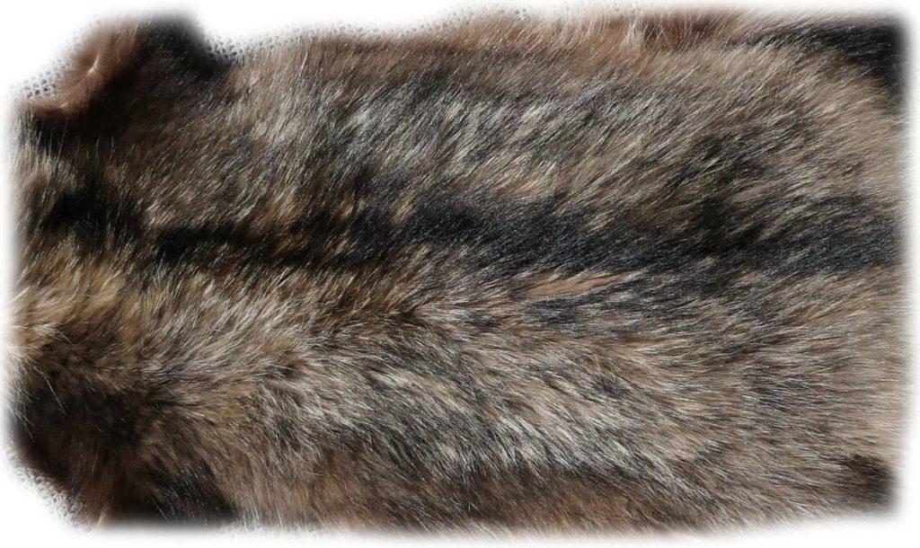 Marderhund 105 cm Rückendetail