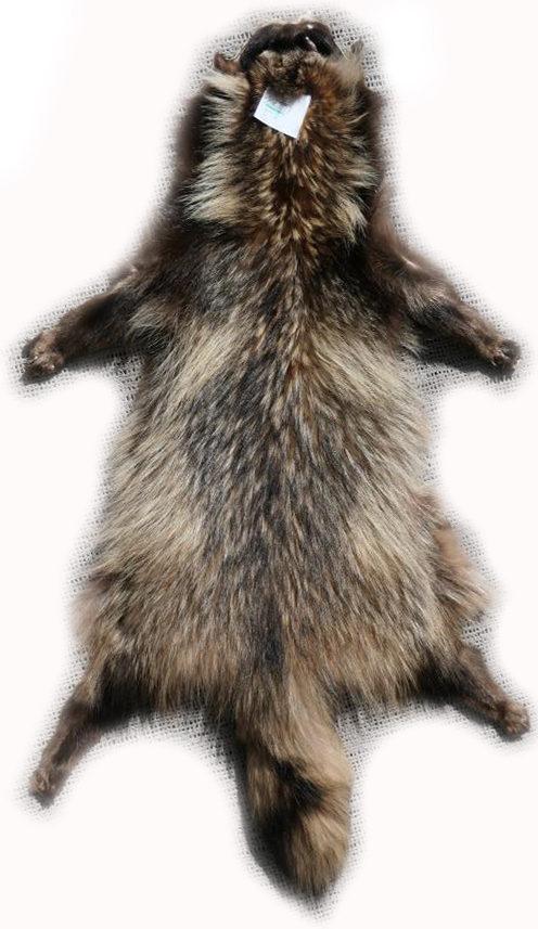 200907 Marderhund 98 cm Gesamtansicht