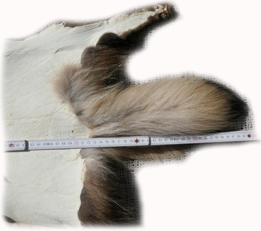 200907 Marderhund 98 cm Länge