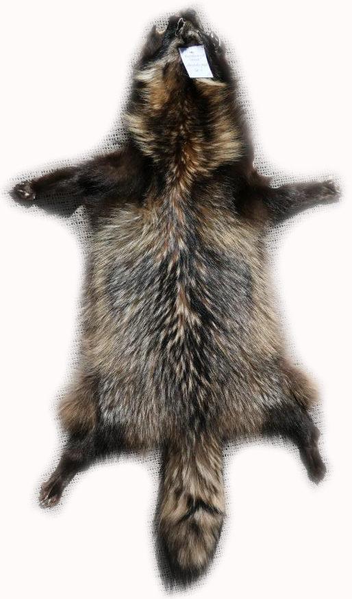 200908 Marderhund 112 cm Gesamtansicht - h
