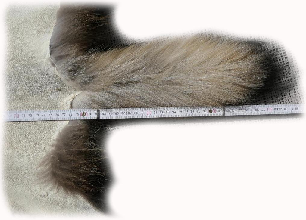 200908 Marderhund 112 cm Länge